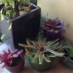 Bromeliad and succulent at our front door.