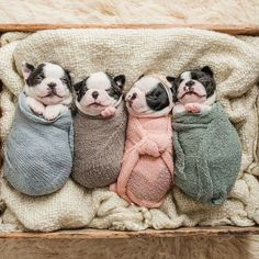 """Explore our internet site for even more info on """"bulldog puppies"""". It is a superb area to find out more. Cãezinhos Bulldog, French Bulldog Puppies, French Bulldogs, Frenchie Puppies, Baby Bulldogs, Mastiff Puppies, Cute Puppies, Cute Dogs, Dogs And Puppies"""