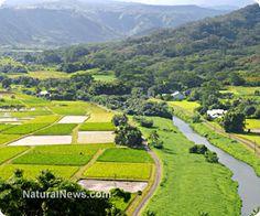 Monsanto sues Hawaiian island for passing legislation to restrict GMOs