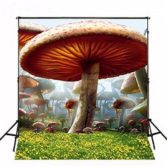 Cheap background for photography, Buy Quality for photography directly from China backdrops alice in wonderland Suppliers: Alice in Wonderland Photography Backdrop Mushroom Forest Lawn background for photography studio without stand Portrait Background, Background For Photography, Photography Backdrops, Photography Backgrounds, Forest Photography, World Photography, Wedding Photography, Children Photography, Alice In Wonderland Mushroom