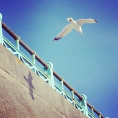 Gull and shadow, Brighton seafront.