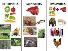 Herbivores,carnivores and omnivores Herbivorous Animals, Herbivore And Carnivore, Wimpy Kid Books, Animal Classification, English Worksheets For Kids, Science, Sensory Activities, Teaching Activities