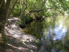 Econfina Creek - my old stompin' grounds :) @Denise Barton