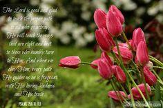 Fragrant (Psalm 25:8-10)