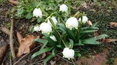... Jetzt gehts los...  Endlich Frühling