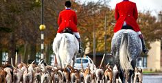 The sport of fox hunting with hounds in Britain, from its beginnings in the 16th century to the Hunting Act 2004…