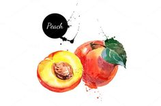 20 water color fruit vector - Tìm với Google