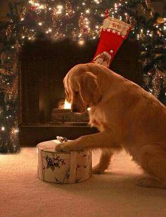 Christmas joy with Bear