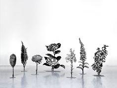 Blackflowers by Zadok Ben-David