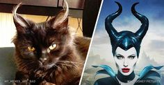 15 cats that look amazingly similar to fictional characters That Look, Around The Worlds, Batman, Superhero, Cats, Amazing, Creative, Funny, Animals