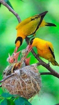 Kinds Of Birds, All Birds, Little Birds, Beautiful Creatures, Animals Beautiful, Cute Animals, Most Beautiful Birds, Exotic Birds, Colorful Birds