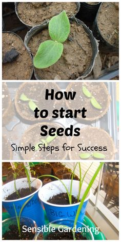 How To Start Seeds (phase One. Vegetable GardeningOrganic GardeningContainer  GardeningGardening TipsPlanting ...