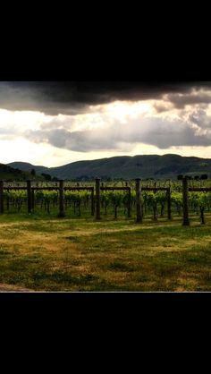 Vineyard, Photography, Outdoor, Outdoors, Photograph, Vine Yard, Fotografie, Photoshoot, Vineyard Vines
