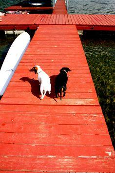 dachshund love. #dogs #weiner dogs #summer #lake