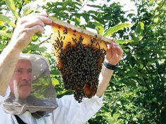 Top-bar beekeeping is a is less expensive method to raise bees that will pollinate your crops and provide natural, organic honey fresh from the comb.