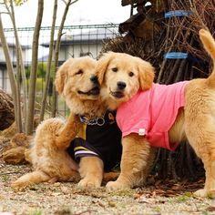 Fuzzy&Lily *  #ilovegolden_retrievers #pets_perfection #my_loving_pet #dogs_of_instagram #golden_retrieverlovers #pupdoggydog #meowvswoof #bestwoof #dog_features #dogsofinstagram #ilovemydog #puppytales #instagramdogs #dogstagram #nature_cuties #FurrendsUpClose  #goldens_ofinstagram #igclub_dogs #gloriousgoldens #instadog #goldenretriever #puppytrip #retrieversgram  #welovegoldens #Excellent_Dogs #puppiesforall  #lillyspicoftheweek #cutepetclub #bestfriends_dogs #west_dog_japan