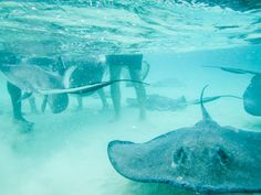 Grand Cayman, Stingray sandbar