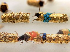 Typical caddisfly larvae build themselves protective pouches of silk adorned with river sediment: pebbles, twigs, and sand. Hubert Duprat's caddisfly larvae have more lavish tastes. Duprat provides them with gold flakes and jewels, including pearls, turquoise, rubies, and sapphires. When the larvae become full-fledged caddisflies, Duprat turns their abandoned tubes into wearable art.