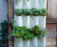 VERTICAL VEGETABLES: Grow up in a small garden and confound the cats!