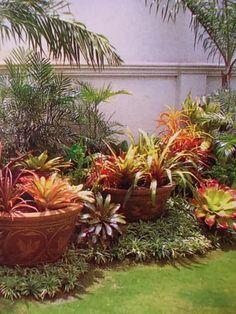 cool bromeliad planters - Google Search