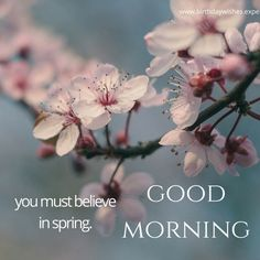 Good Morning image with spring quote and almond flowers