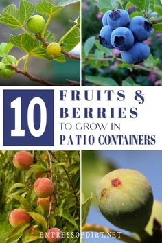 These fruits and berries can grow in containers where space is limited or to decorate a patio. These fruits and berries can grow in containers where space is limited or to decorate a patio. Dwarf Fruit Trees, Growing Fruit Trees, Fruit Plants, Fruit Garden, Edible Garden, Growing Plants, Growing Vegetables, Vegetable Garden, Patio Fruit Trees