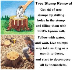 Tree Stump Removal fill with Epsom salt follow with water and wait at least a month to decay.