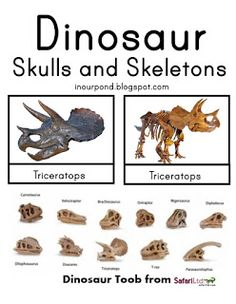 In Our Pond: Dinosaur Skulls Matching Cards