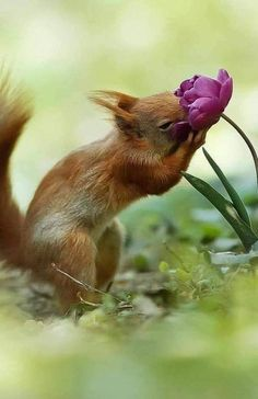 Photos can be NSFW. I love music, dance, art, animals, and fashion. Cute Creatures, Beautiful Creatures, Animals Beautiful, Nature Animals, Animals And Pets, Baby Animals, Squirrel Pictures, Animal Pictures, Smelling Flowers