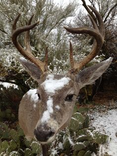 24 best our work tucson taxidermy images on pinterest taxidermy