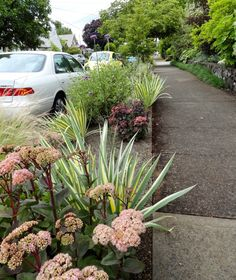 danger garden: The Ferrante Garden, our last garden from the 2014 Portland Garden Conservancy Tour - Planted Parking Strip