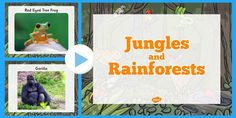 This fantastic powerpoint features photos of plants, animals and minibeasts you might find in the jungle or rainforest. Great for use alongside your teaching on habitats Rainforest Activities, Red Eyed Tree Frog, Tree Frogs, Habitats, Animals, Forests, Teaching Ideas, Animais, Animales