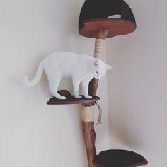 Árvore para gato