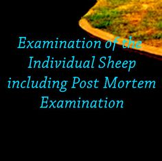 Ian and Neil will discuss the Examination of the Individual Sheep including Post Mortem Examination.  Neil Sargison grew up working with dairy cattle and has worked as a farm animal veterinary practitioner in Scotland and New Zealand since graduating from the Cambridge University Veterinary School in 1984. Read more here...