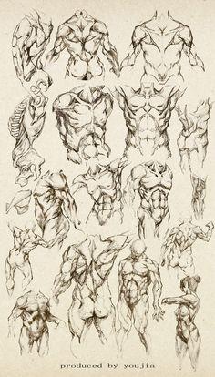 Anatomy study of a male - Male Torso - drawing reference Human Anatomy Drawing, Human Figure Drawing, Figure Drawing Reference, Body Drawing, Art Reference Poses, Anatomy Reference, Anatomy Sketches, Body Sketches, Body Anatomy
