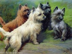 c1900-Moody-Four-Cairn-Terrier-Dog-Dogs-on-Rock-NEW-Large-Note-Cards
