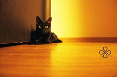 Ruah: Black Cat White Cat Luck is choice.