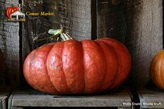 I love these pumpkins! Long Island cheese pumpkin - Google