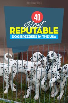 40 Reputable Dog Breeders in the USA of 2018 (AKC Recognized)