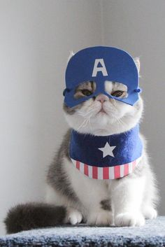 Strike a paws – Owner dresses her cats as cartoon characters and the outcome is hilarious - Storytrender