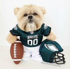 Go Eagles, Eagles Fans, Fly Eagles Fly, Football Memes, Football Team, Our National Bird, Philadelphia Eagles Football, Win Or Lose, Dog Rules