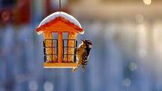 """Képtalálat a következőre: """"madarak télen"""""""