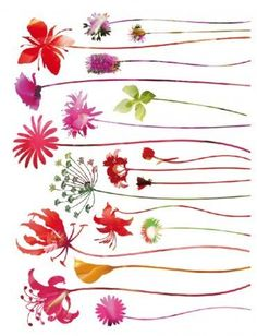 Posters Flowers Poster Sticker Wall Tattoo  Wildflowers 34 X 26