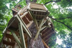 A combination of oak and sycamore trees support the treehouse.