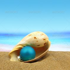 hristmas ball in a sea shell on the beach ... argentina, australia, ball, beach, brazil, card, celebration, christmas, coastal, coastline, cockle, conch, decoration, destination, gift, greeting, happy, holiday, holidays, island, jewelery, merry, navidad, new, new zealand, ornament, ornate, sand, santa claus, sea, seashore, season, seasonal, shell, shopping, summer, time, tourism, tourist, travel, tropical, vacation, winter, wishes, xmas, year