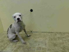 Brooklyn Center   ARIEL - A1003195  FEMALE, WHITE / BROWN, AMER BULLDOG MIX, 6 mos STRAY - STRAY WAIT, NO HOLD Reason STRAY  Intake condition NONE Intake Date 06/14/2014, From NY 11207, DueOut Date 06/17/2014, Medical Behavior Evaluation GREEN  https://www.facebook.com/photo.php?fbid=820354524644095set=a.617941078218775.1073741869.152876678058553type=3theater