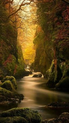 Fairy Glen Gorge, River Conwy - Science And Nature Beautiful World, Beautiful Places, Beautiful Pictures, Beautiful Scenery, Amazing Photos, Natural Scenery, Landscape Photography, Nature Photography, Amazing Photography