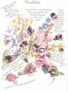 Marjolein Bastin and bumblebees