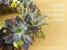 How to make living wreath/topiary with succulents. Living Succulent Wreath Tutorial - Succulents and Sunshine