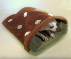 Chihuahua's best friend when mom is too busy to snuggle.